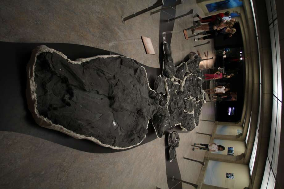 Fossilized remains of a large prehistoric sea creature, with the outline of the beast's original size on the floor.