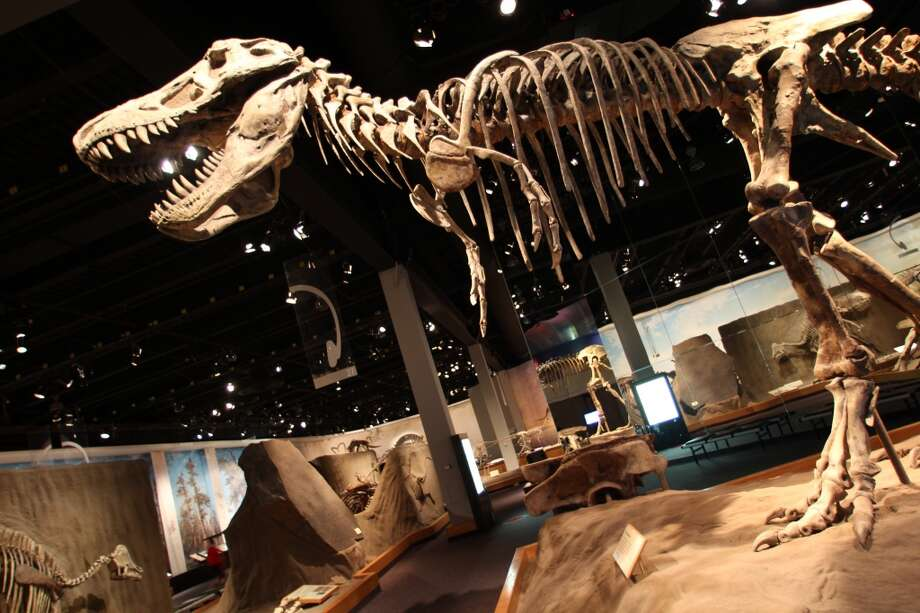 Displays at the Royal Tyrrell cover dinosaurs, but also a broad range of paleontology and geology topics.