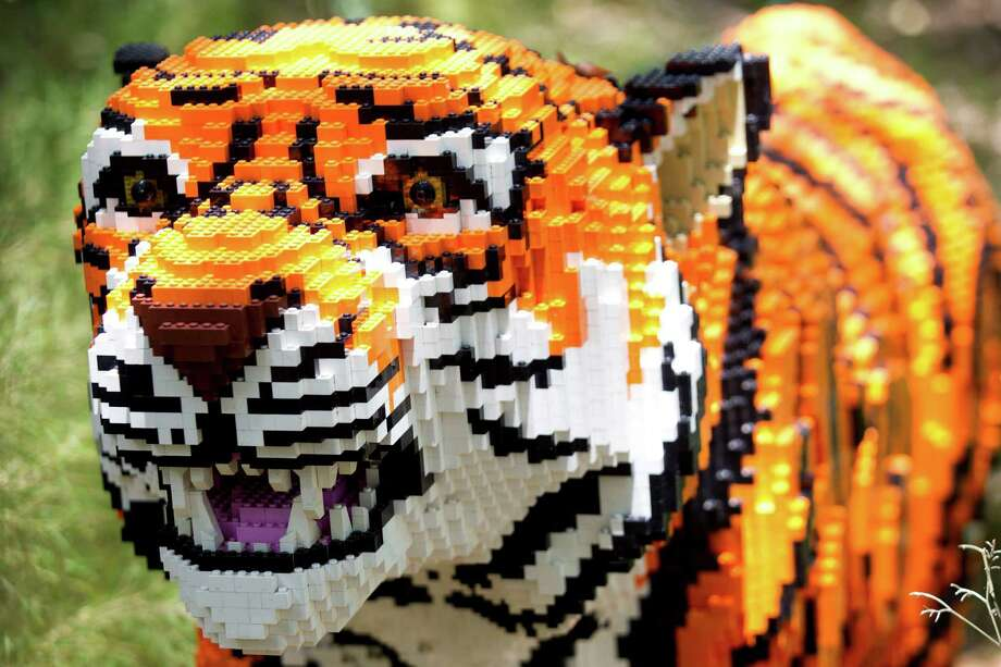 A LEGO tiger is seen in the new Animals Assembled exhibit during a preview at the Houston Zoo Friday, May 24, 2013, in Houston. More than two dozen LEGO brick animal sculptures, representing 10 species including flamingos, a tiger, zebra and fish are on display opening May 25 through Labor Day. Photo: Brett Coomer, Houston Chronicle / © 2013 Houston Chronicle
