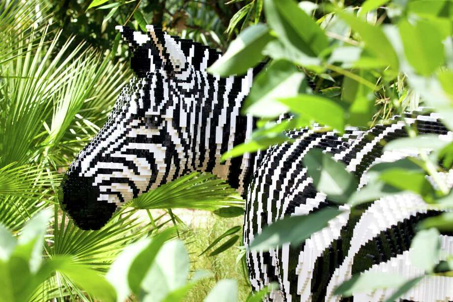 A LEGO zebra Photo: Brett Coomer, Houston Chronicle / © 2013 Houston Chronicle