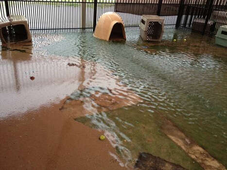 Flooded kennel at Animal Care Services. Photo: Courtesy Animal Care Services