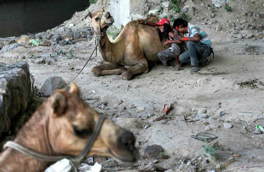 Camel handlers rest with their camels under a flyover in New Delhi, India , Friday, May 24, 2013. The capital city has been reeling under a heat wave with temperature crossing 45 degree Celsius (113 degree Fahrenheit) on Friday. Photo: AP