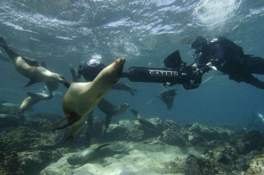 In this May 2013 photo provided by Catlin Seaview Survey, Christophe Bailhache navigates an SVII camera through a large group of sea lions during a survey dive at Champion Island in Galapagos. Few have laid eyes on many of the volcanic islands of the Galapagos archipelago that remain closed to tourists. But soon the curious will be able to explore these places that inspired Charles Darwin's theory of evolution from their computers or mobile devices. Google Maps sent crews armed with backpack-mounted Street View cameras and underwater gear to the Galapagos, and will be bringing the islands' natural wonders to the Internet. Photo: AP