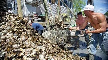 From left, Captain Steve Hopkins, Patrick McGlone, and Rene Euceda unload oysters from a boat at Norm Bloom and Son in Norwalk, Conn., on Friday, May 17, 2013. Maple syrup, dairy, warm weather produce, shellfish and apple and pear production will be affected by changes in temperature and the abundance of rain or lack of it, which could reduce production yields, state officials warned Monday.