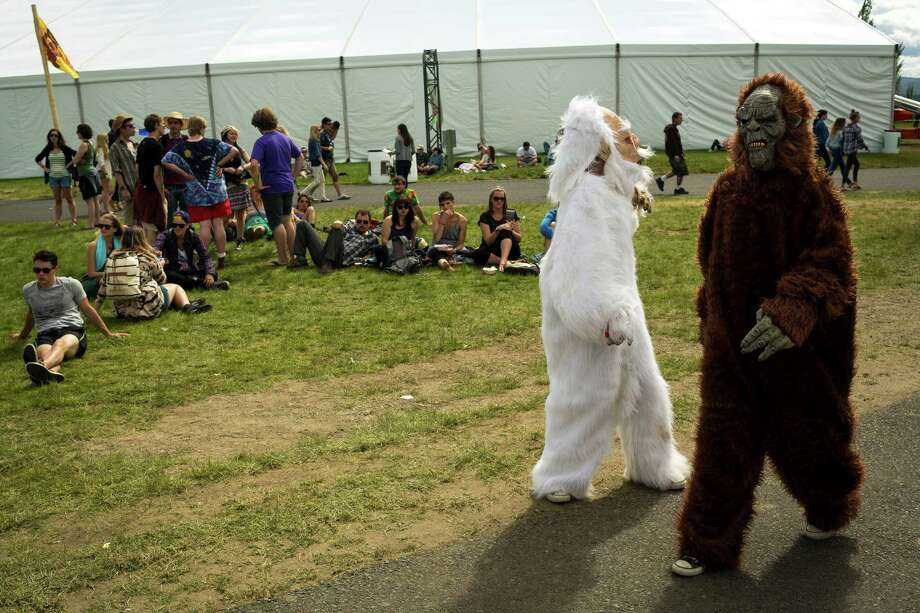 The hairy costume of the festival's name was in high occurrence on the second day of the annual Sasquatch music festival Saturday, May 25, 2013, at The Gorge Amphitheatre in George. Photo: JORDAN STEAD, SEATTLEPI.COM / SEATTLEPI.COM