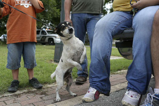 Puddles, a black-and-white terrier, was rescued by Celia Olivarez when she and the members of her family briefly returned to their home to collect personal items and check the damage.