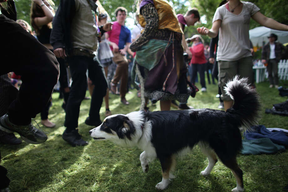 Jedi Master checks out the dancing from dog level as people hop around to music from the band Alder Street during the Northwest Folklife Festival. Photo: JOSHUA TRUJILLO, SEATTLEPI.COM / SEATTLEPI.COM
