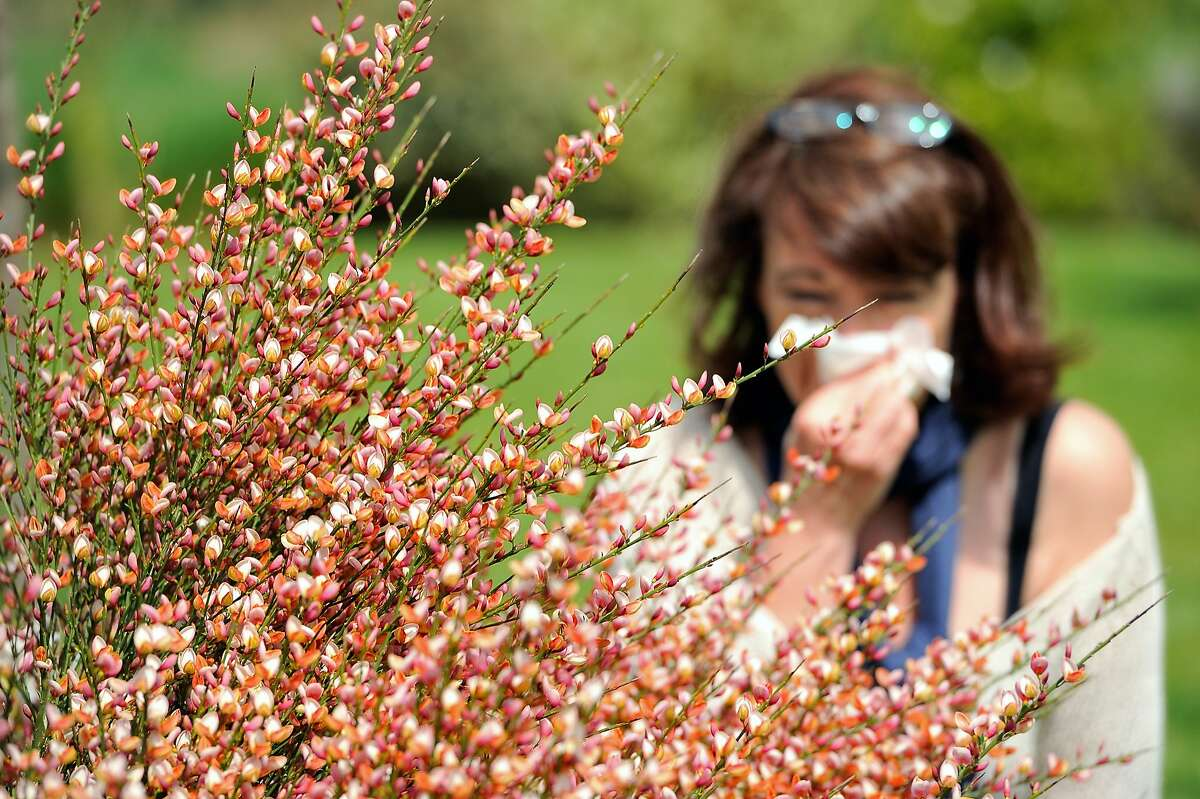 A woman blows her nose in Godewaersvelde, northern France on May 18, 2013, as the return of pleasant weather marks the arrival of allergenic pollen. AFP PHOTO / PHILIPPE HUGUENPHILIPPE HUGUEN/AFP/Getty Images
