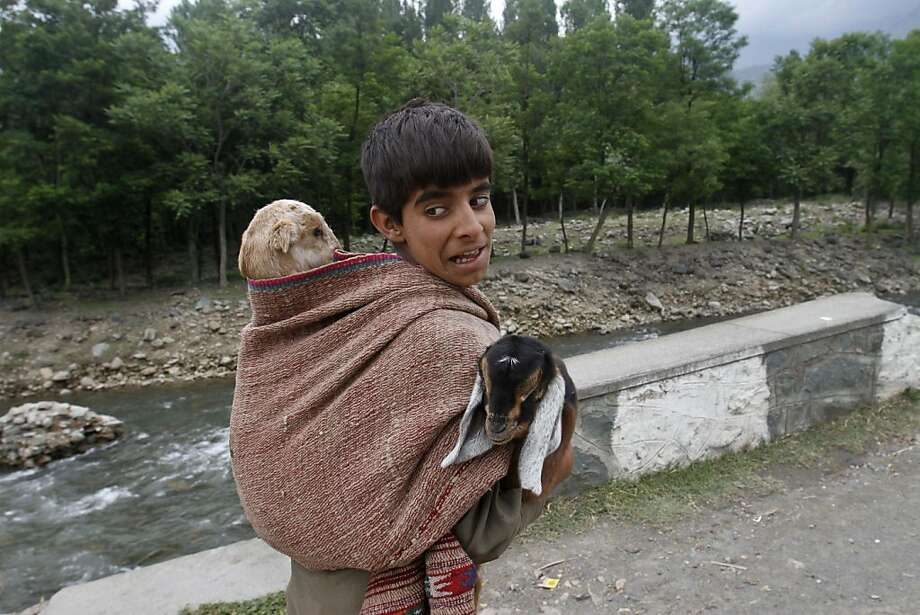 It's cold outside, better put on two goats:One's not enough to keep this Kashmiri Bakarwal   boy warm on the outskirts of Srinagar, India. Photo: Mukhtar Khan, Associated Press