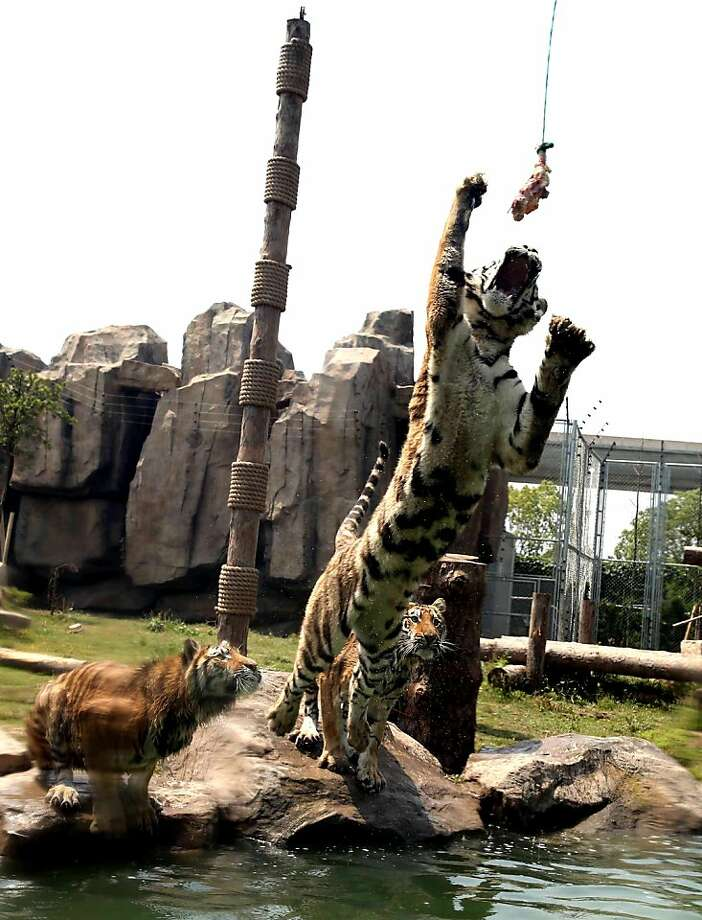 Forget marlin: For really exciting big-game sport fishing, try 