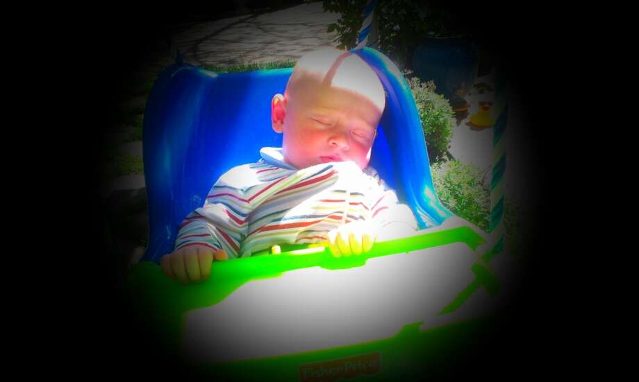 Snoozing in the sunshine. Photo: Celeste Romo