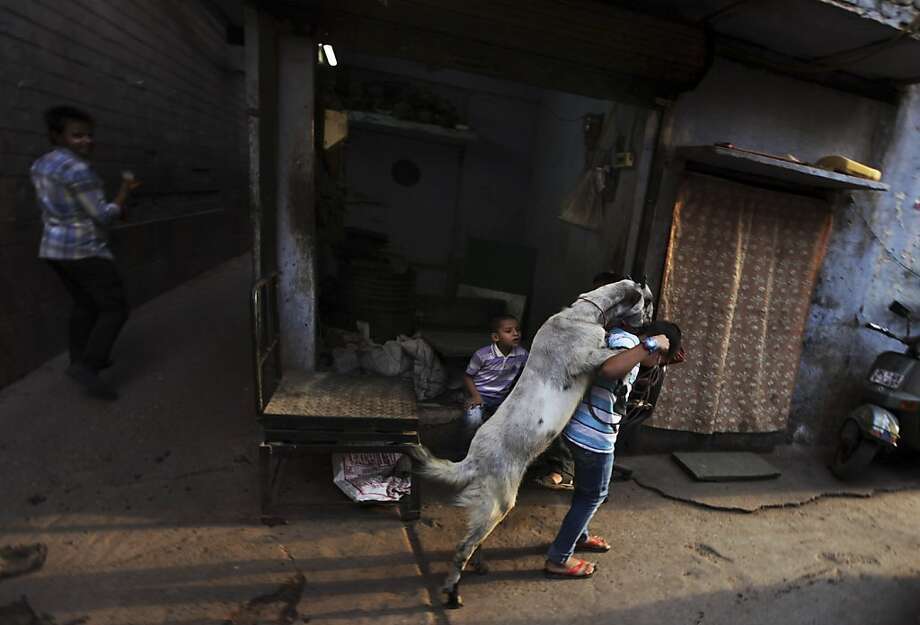 I think he likes you:A goat jumps on the back of a boy in an alley in New 