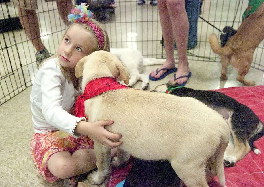 Can I have all of them?Four-year-old Katelyn Clark takes shepherd/Rhodesian Ridgeback mix puppies for a test snuggle at the Dustbowl Animal Rescue adoption drive in Odessa, Texas. Photo: Reporter-Telegram, James Durbin