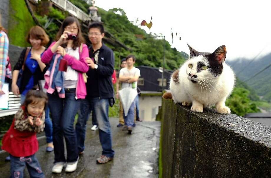 Furball destination:Houtong, Taiwan, a former coal mining town, didn't have much in the way of natural   beauty or historical significance to draw tourists, so it began promoting its   resident cat population. It built pedestals for lounging, feeding areas and even an   elevated bridge for cats and visitors to cross railroad tracks. Now cat lovers   arrive by the dozens to pet and photograph the 100 or so felines. Photo: Wally Santana, Associated Press
