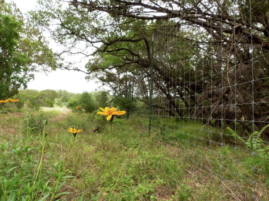 The property owned by Bat Conservation International, left of the fence line, abuts with land that might be developed to host homes and businesses. The Bracken Bat Cave is about 600 yards away from this fence line. Saturday, May 8, 2013. Photo: Billy Calzada, San Antonio Express-News / San Antonio Express-News