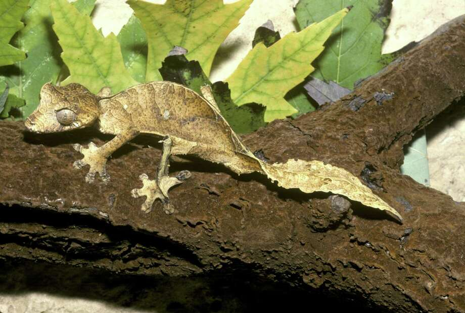 Every planet should have a variety of geckos, too. Photo: James Gerholdt, Multiple / (c) James Gerholdt