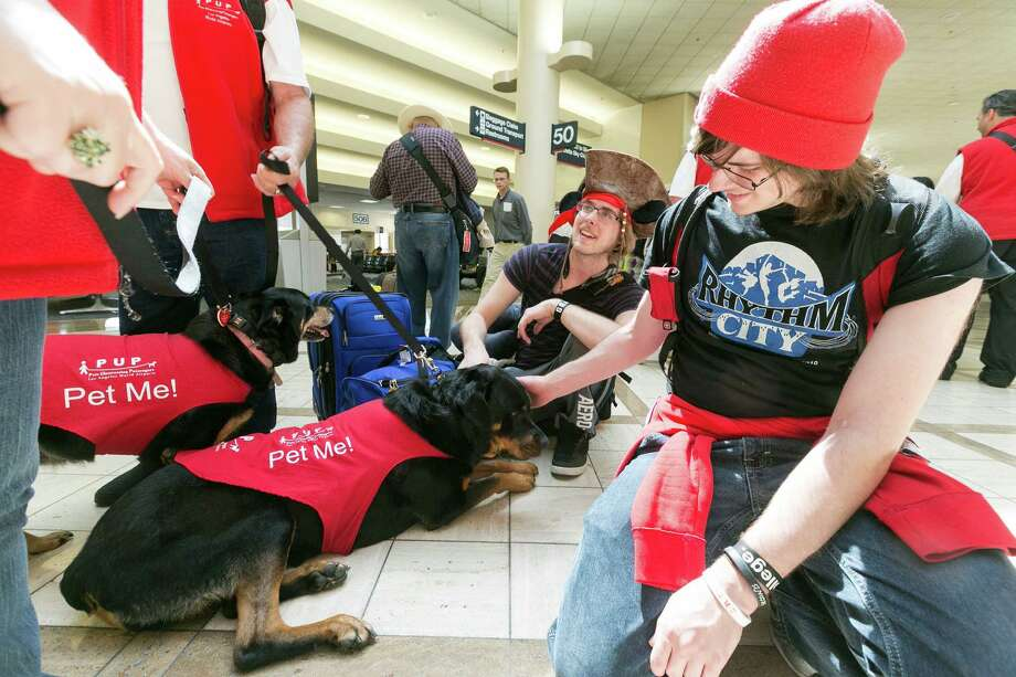 Travelers pet airport therapy dogs as volunteers with Pets Unstressing Passengers (PUPs) walk around the Los Angeles International Airport  terminal. The Los Angeles International Airport has 30 therapy dogs and is hoping to expand its program. The dogs are intended to take the stress out of travel: the crowds, long lines and terrorism concerns. Photo: Damian Dovarganes, Associated Press / AP