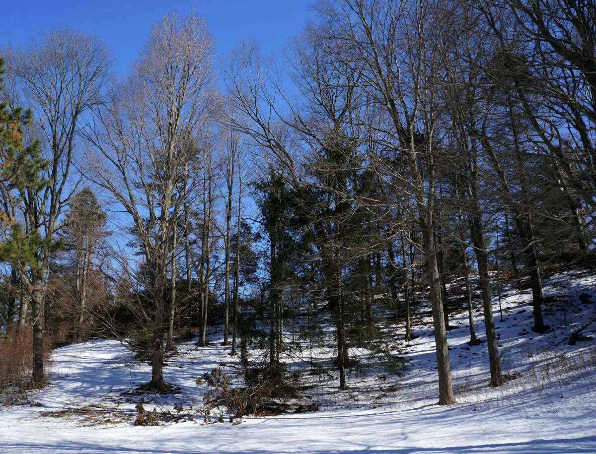 A wooded portion of the Baron's South Property as seen in winter. A developer has been selected to build a senior-citizen project on the site.