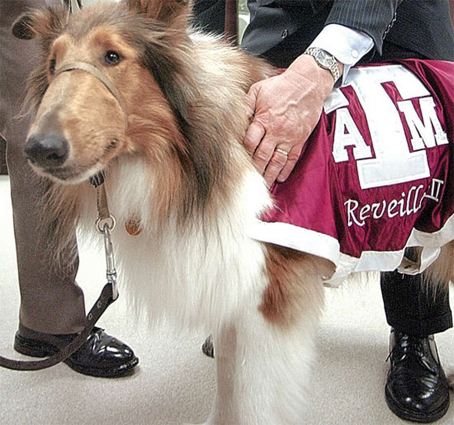 University of Texas president Larry Faulkner greets collie Reveille VII (7), the Texas A&M mascot,  on the Texas A&M campus Friday, June 28, 2002. Faulkner traded jobs with  Texas A&M president Ray M. Bowen for the  day. The presidents of the state's two largest universities said they wanted to  prove that the schools could put aside their good-natured bad blood and work  together. (AP Photo/Bryan College Station Eagle, Stuart Villanueva)