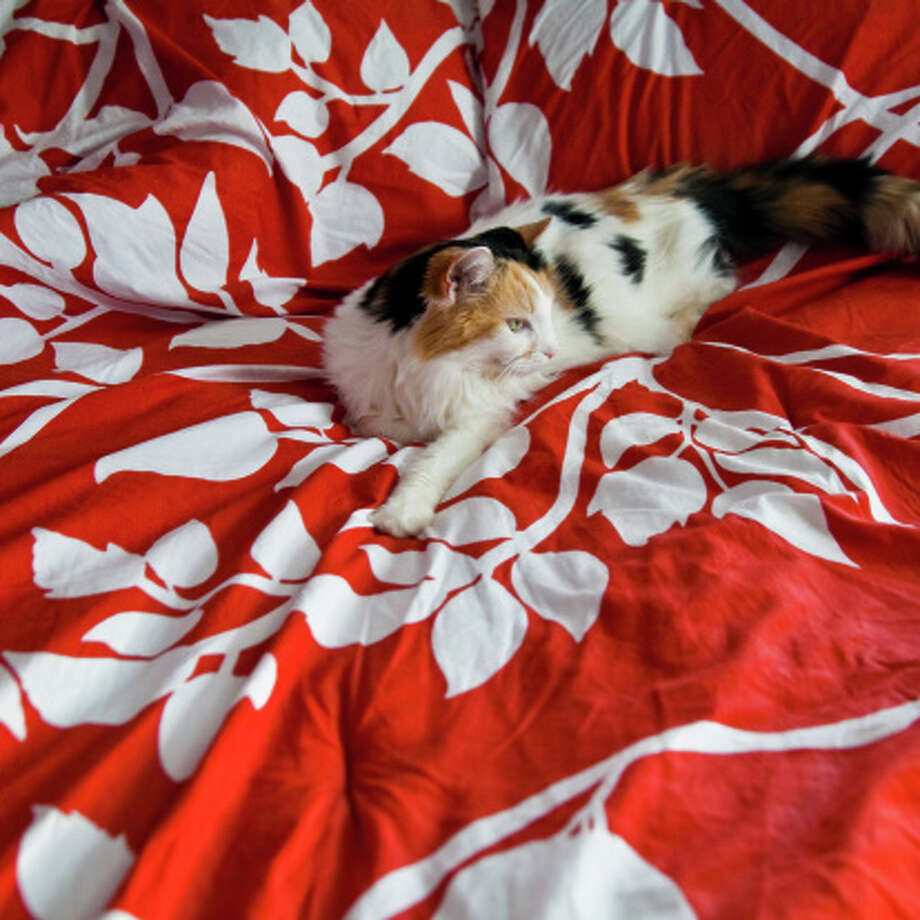 Comforters are another item that can be washed with the seasons, but the article warns that all bedding should be washed after someone has been sick. Photo: Laura S. Kicey, Getty Images/Flickr Open / Flickr Open