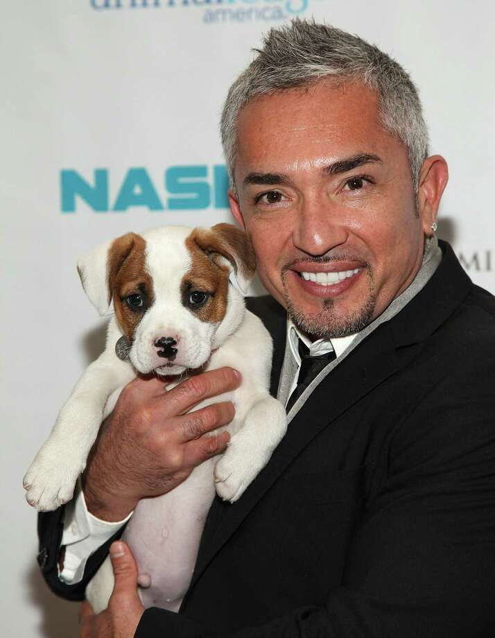 Cesar Millan attends the 2011 Animal League's Dogcatemy Rescue Awards dinner at the NASDAQ on December 8, 2011 in New York City.  NEW YORK, NY - DECEMBER 08:  Cesar Millan attends the 2011 Animal League's Dogcatemy Rescue Awards dinner at the NASDAQ on December 8, 2011 in New York City.  (Photo by Omar Tobias Vega/Getty Images) Photo: Omar Tobias Vega, Contributor / ONLINE_YES