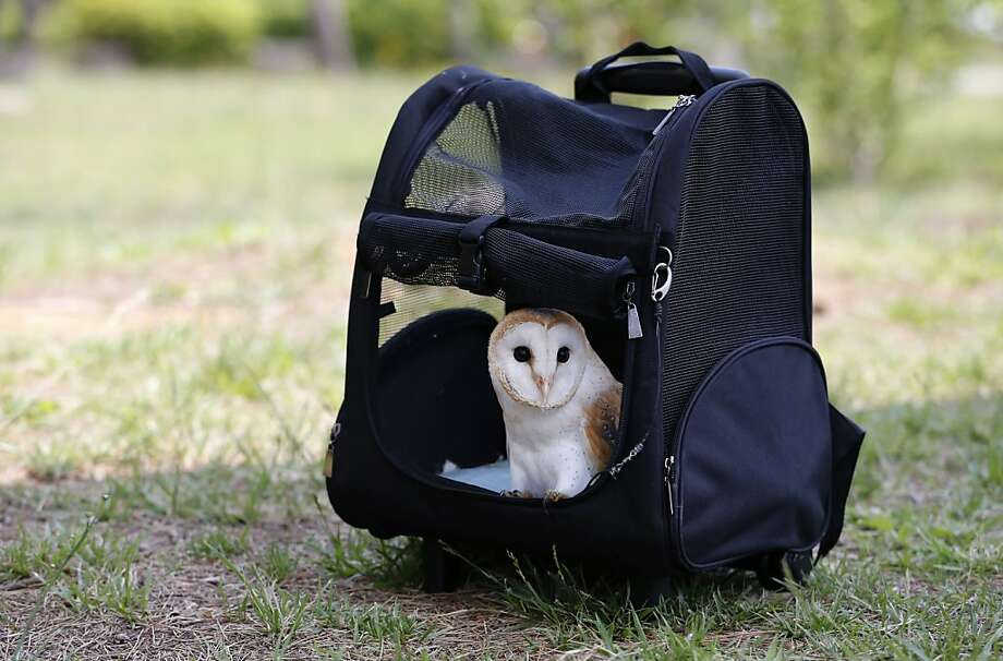 Owl-packed for a trip to the park? Don't forget to close the zipper - Baron looks ready to fly the coop. (Tokyo.) Photo: Shizuo Kambayashi, Associated Press