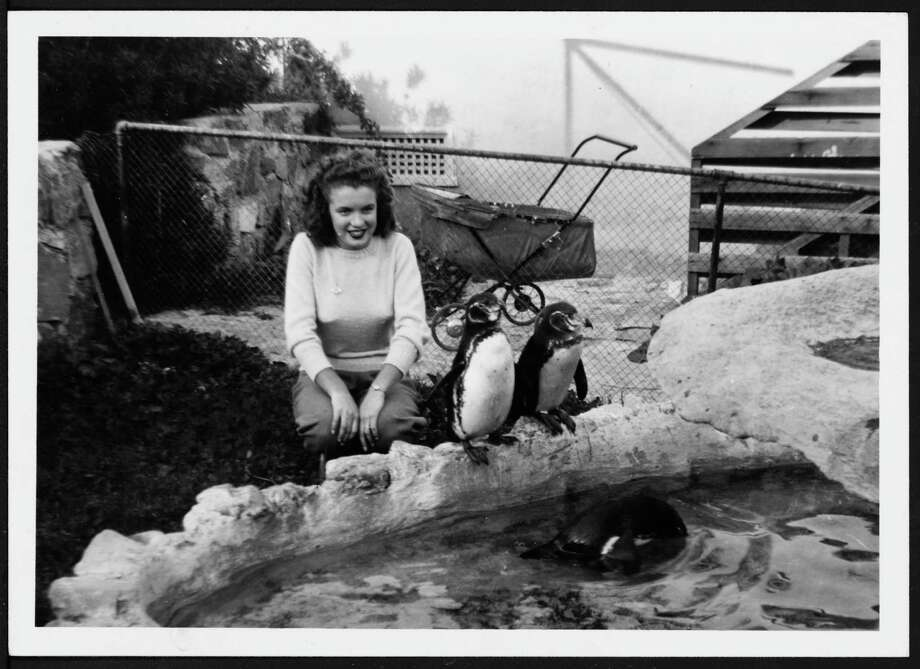 Norma Jeane Baker, future film star Marilyn Monroe (1926 - 1962), playing with three penguins, circa 1941. (Photo by Silver Screen Collection/Hulton Archive/Getty Images) Photo: Silver Screen Collection, Multiple / 2006 Getty Images