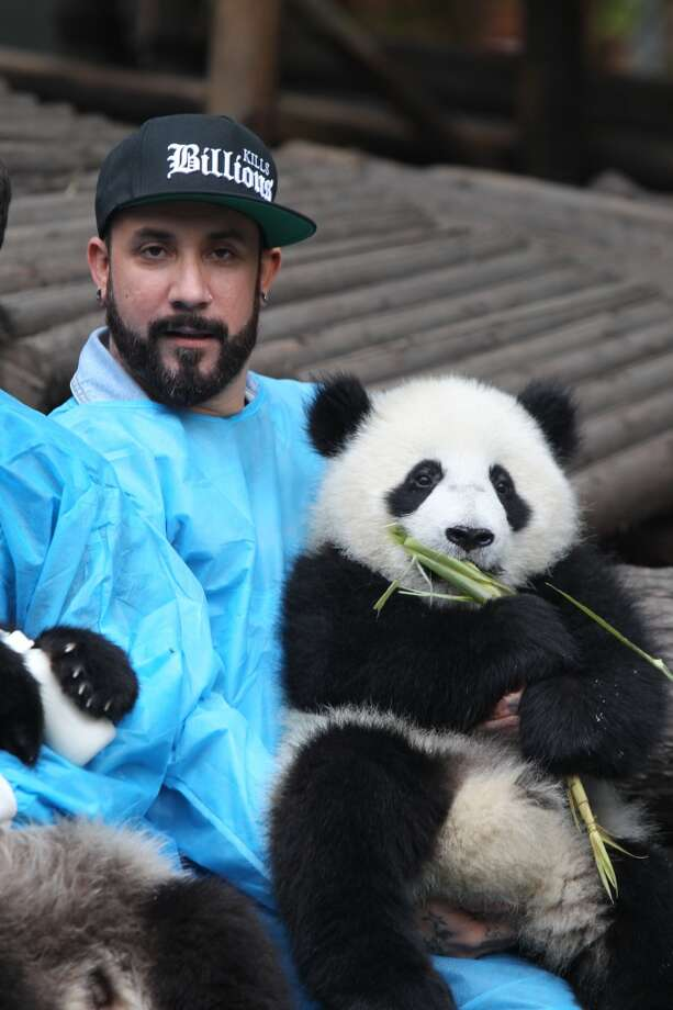 A. J. McLean of Backstreet Boys holds a giant panda at the Giant Panda Breeding Research Institute during their China Tour on May 30, 2013 in Chengdu, Sichuan Province of China.  (Photo by ChinaFotoPress/ChinaFotoPress via Getty Images)