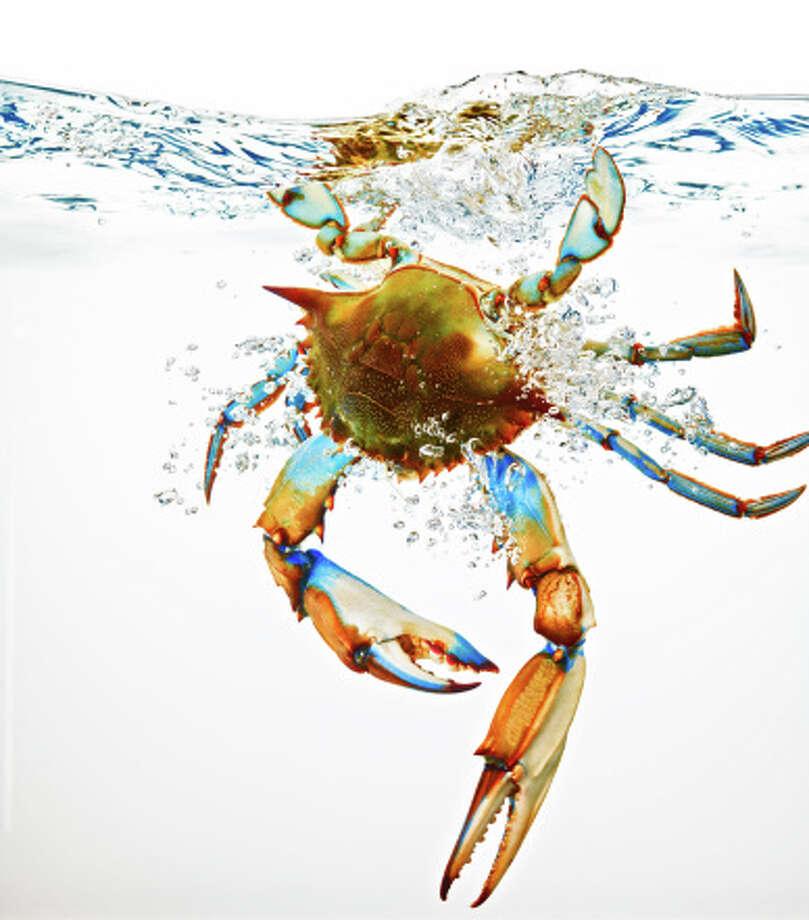 Maryland State food: Blue crabs Photo: Jack Andersen, Getty Images / (c) Jack Andersen