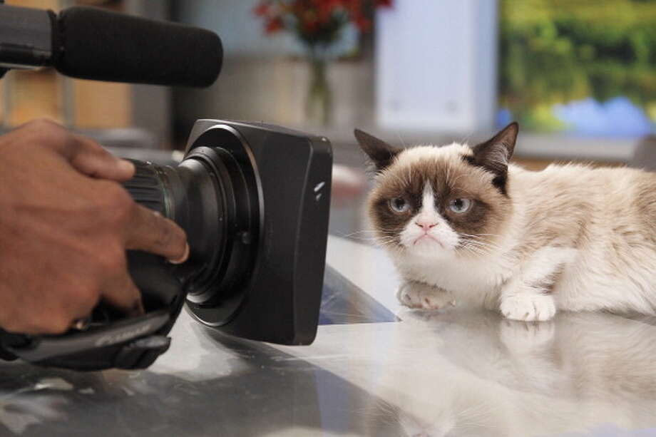 Internet sensation Grumpy Cat appears on ABC's 'Good Morning America' on March 22, 2013. Photo: Lou Rocco, ABC Via Getty Images / 2013 American Broadcasting Companies, Inc.