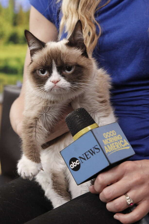 Grumpy Cat appears on ABC's 'Good Morning America' on March 22, 2013. Photo: Lou Rocco, ABC Via Getty Images / 2013 American Broadcasting Companies, Inc.