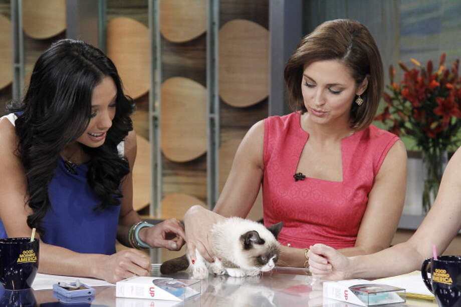 Grumpy Cat appears with Rachel Smith and Paula Faris on ABC's 'Good Morning America' on March 22, 2013. Photo: Lou Rocco, ABC Via Getty Images / 2013 American Broadcasting Companies, Inc.