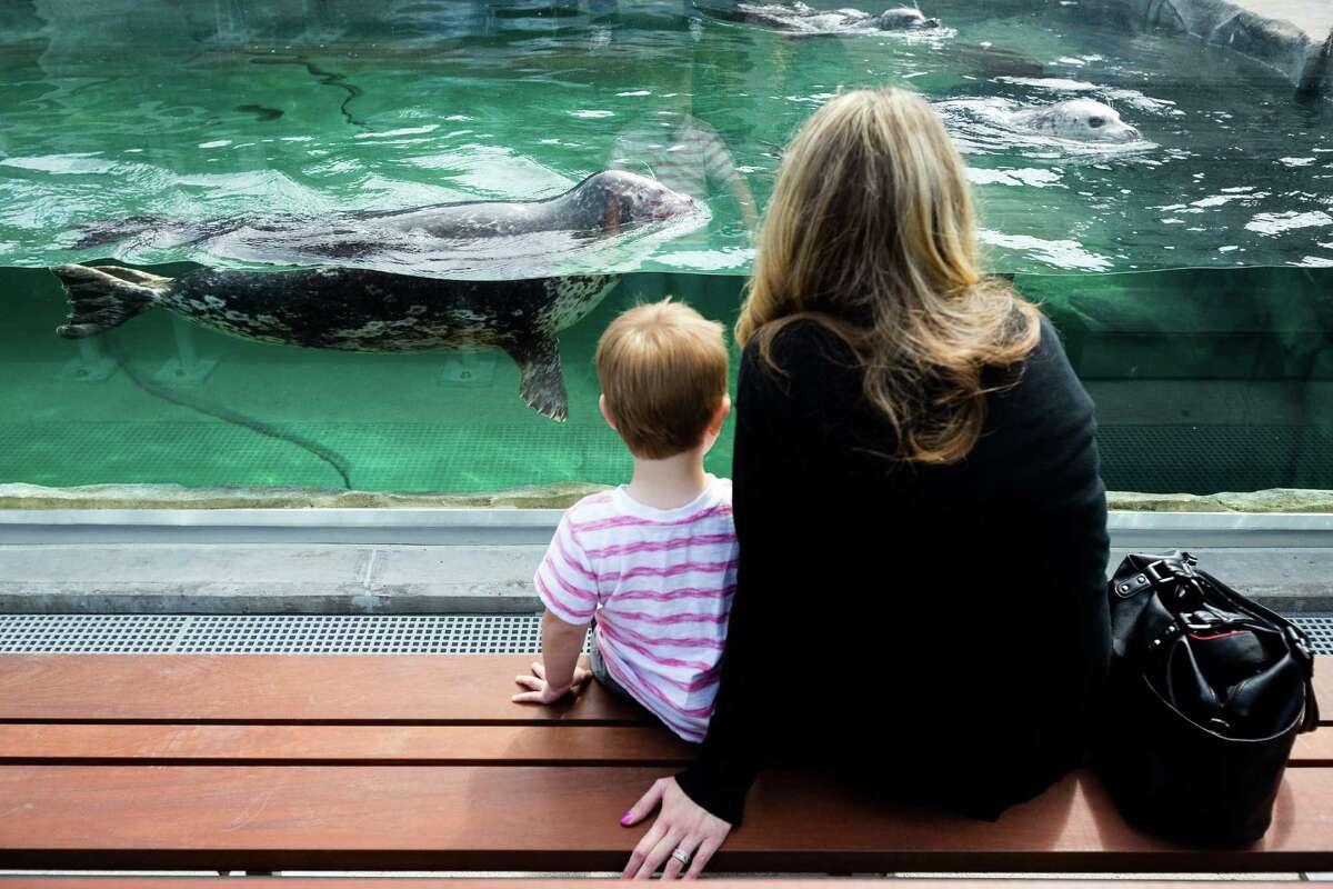 (Honorable Mention) Seattle Aquarium -- Seattle