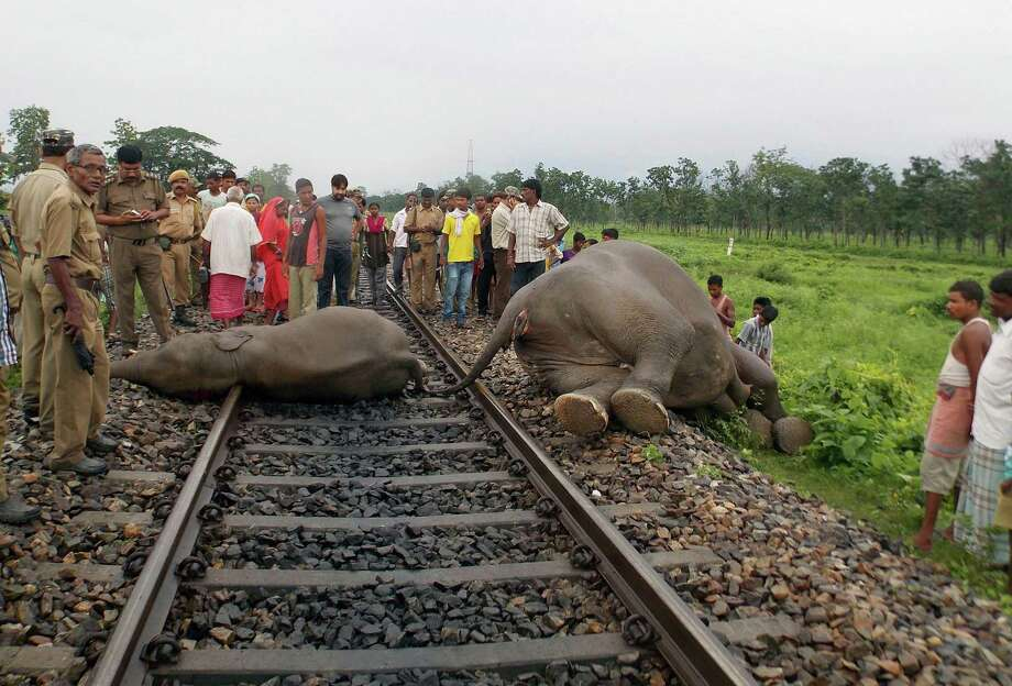 Forest officials and villagers stand near the bodies of two among the three elephants killed after being hit by a speeding train at Moraghat in Jalpaiguri district, West Bengal state, India, Thursday, May 30, 2013. Three elephants were killed and another was injured when a herd was crossing railroad tracks outside the state's elephant corridor. Dozens of elephants have died in recent years in such accidents as trains run through national parks and forests. Activists have called for trains to lower their speeds through such areas. Photo: AP