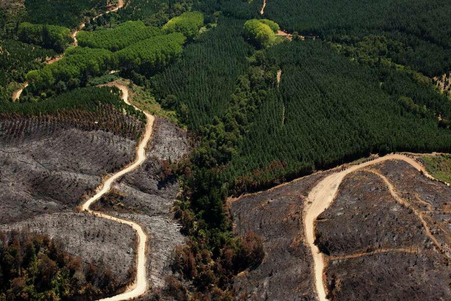 In this Feb. 7, 2013 photo, part of a forest is burned after a forest fire started by Mapuche radical groups to protest the presence of agricultural firms on their ancestral land in Temuco, Chile. In addition to more land, the Mapuche have called for the expulsion of timber companies they say damage the environment by planting millions of invasive pines and eucalyptus trees to supply European and U.S. consumers. They also want an apology from the Chilean government for their mistreatment as well as autonomous rule similar to that in the Catalonian region of Spain. Photo: AP