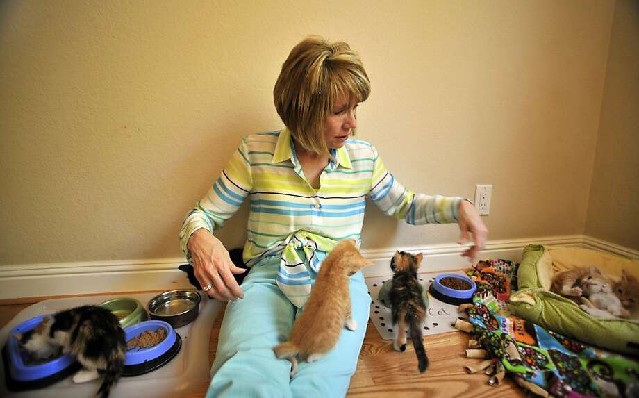 Rosalyn Simon of Tri-Valley Animal Rescue cares for kittens at her Pleasanton home. Hers is one of several animal welfare centers seeking people to serve as foster parents during a kitten boom. Photo: Josh Edelson, Special To The Chronicle