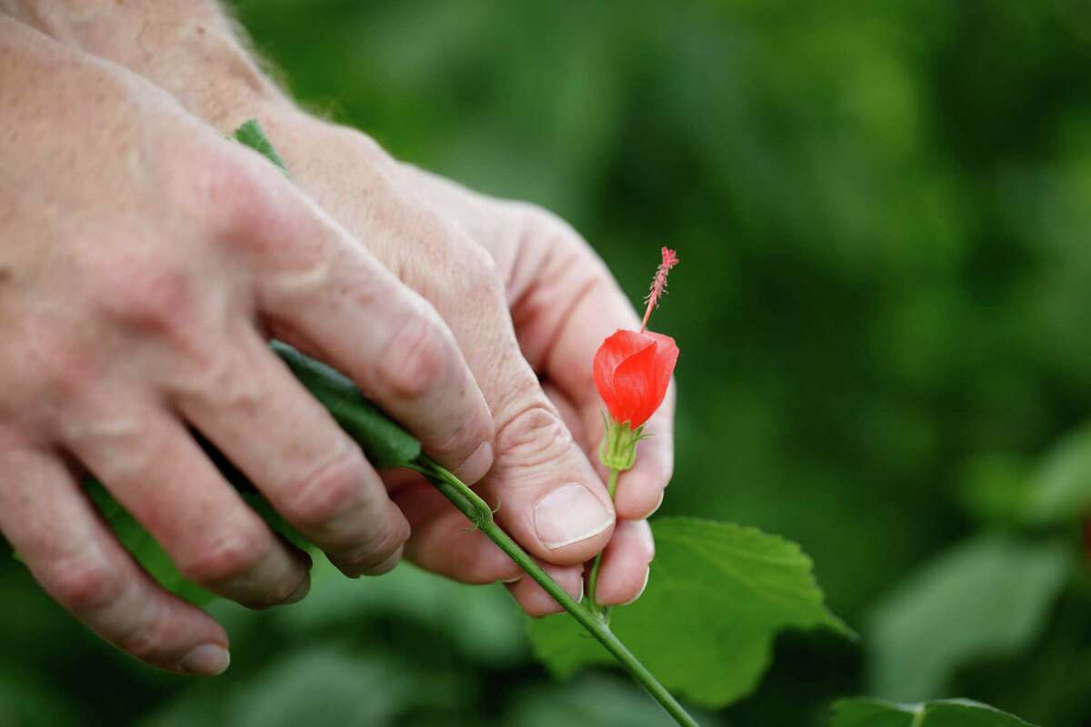 Mark Vorderbruggen says never eat a plant unless you are absolutely sure what it is.