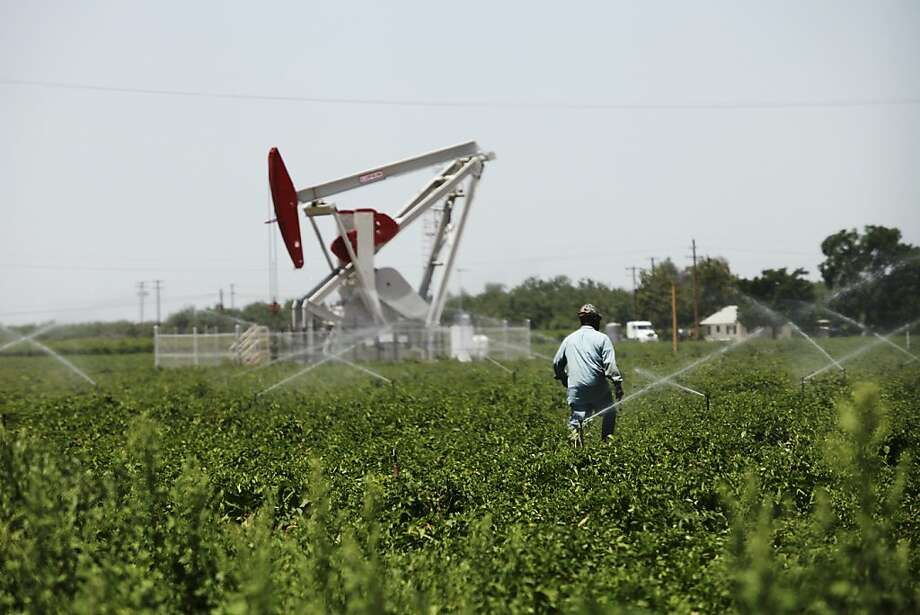 A farmer walks across a field near oil rigs in 2013 in Shafter (Kern County). Photo: Emily Berl, New York Times