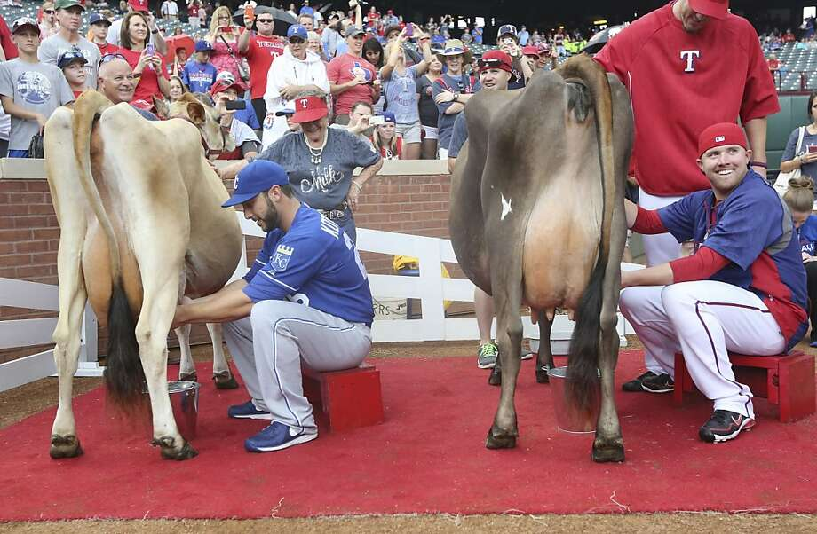 Madison Bumgarner could have schooled both of them:Texas Rangers reliever Robbie Ross (right) and Kansas City Royals catcher George Kottaras face off in a cow-milking contest on Farm and Ranch Day at Rangers Ballpark in Arlington. Kottaras outsqueezed Ross, proving he knows how to handle a teat. Photo: LM Otero, Associated Press