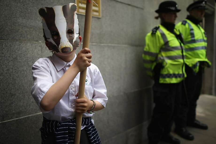 Britain begins killing badgers:An activist protests Britain's badger cull outside the Department for Food and Rural Affairs in London. The cull was set to get under way Monday in an attempt to safeguard cattle from tuberculosis. Photo: Dan Kitwood, Getty Images