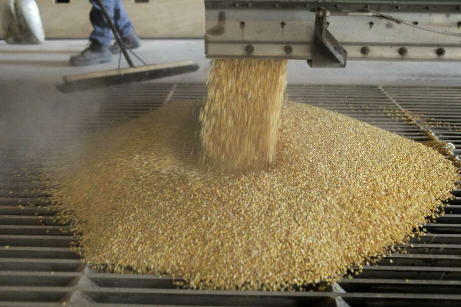 Corn flows at an ethanol plant in Garnett, Kan. Researchers from Rice and the University of California at Davis found that a rise in temperatures would cut the ethanol yield 7 percent within 40 years. Photo: Steve Hebert / New York Times