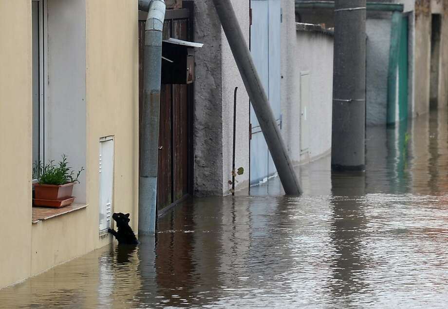 Looking for a way out: We really hope the photographer stopped to help this kitty seeking higher ground in Kly, Czech Republic. Photo: Michal Cizek, AFP/Getty Images