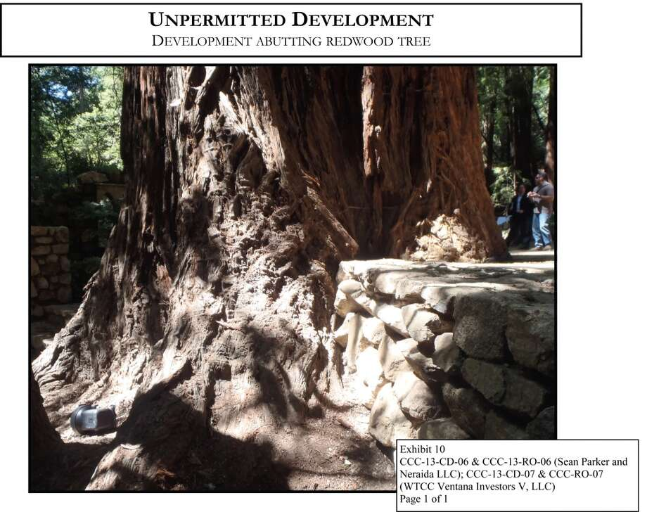 Natural fixtures, such as this decades-old redwood, were built into the plans of the wedding site. This kind of abutting is not permitted by The California Coastal comission, as it could affect further growth and overall health.
