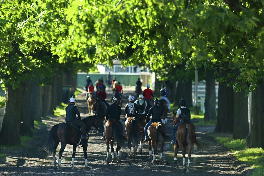 ELMONT, NY - JUNE 04:  A general view of horses walking to and from the track during training at Belmont Park on June 4, 2013 in Elmont, New York. Photo: Al Bello, Getty Images / 2013 Getty Images