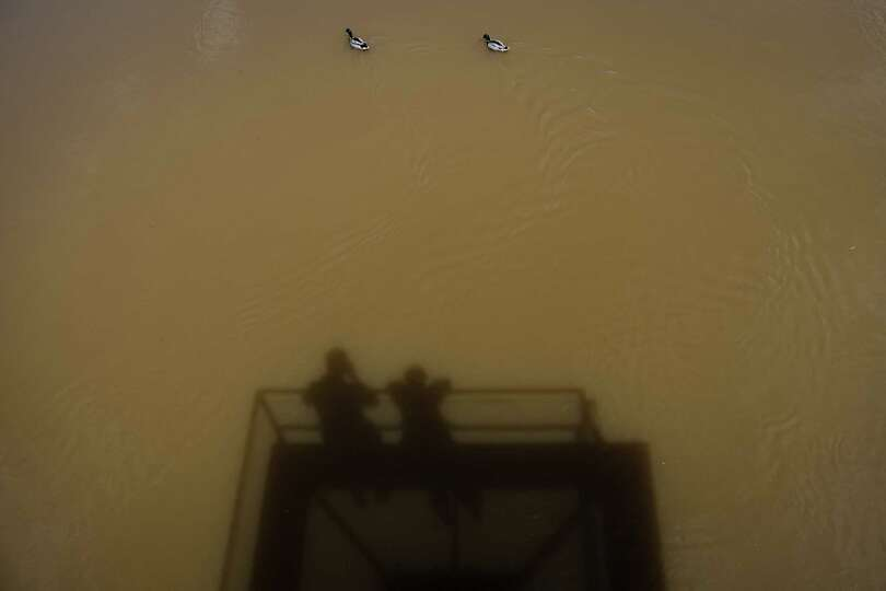 TOPSHOTS Two ducks swim in the swollen Regnitz River in Bamberg, southern Germany, on June 4