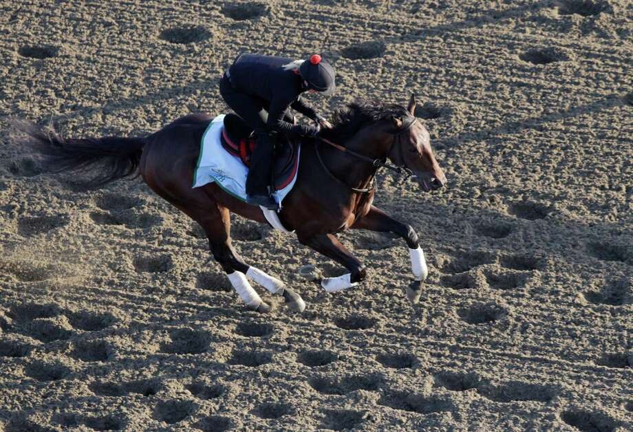 Kentucky Derby winner Orb gallops on the track during a morning workout at Belmont Park, Wednesday, June 5, 2013 in Elmont, N.Y. Orb is entered in Saturday's Belmont Stakes horse race. Photo: Mark Lennihan, AP / AP