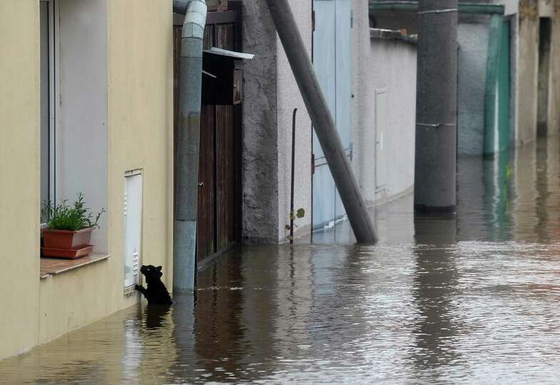 TOPSHOTS A cat tries to escape from water by the river Vltava in Kly, near Melnik, Czech Republic, o
