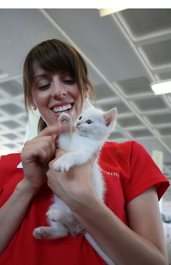 Revenue was down in the second quarter due to  ... oh, look, an adorable kitten!Business presentation tip - when delivering bad news create a diversion. (Julie VanMater actually has only good news to report - her employer, Nestle Purina, is renovating the Animal House shelter in St. Louis.) Photo: Nestle Purina PetCare Company, Associated Press