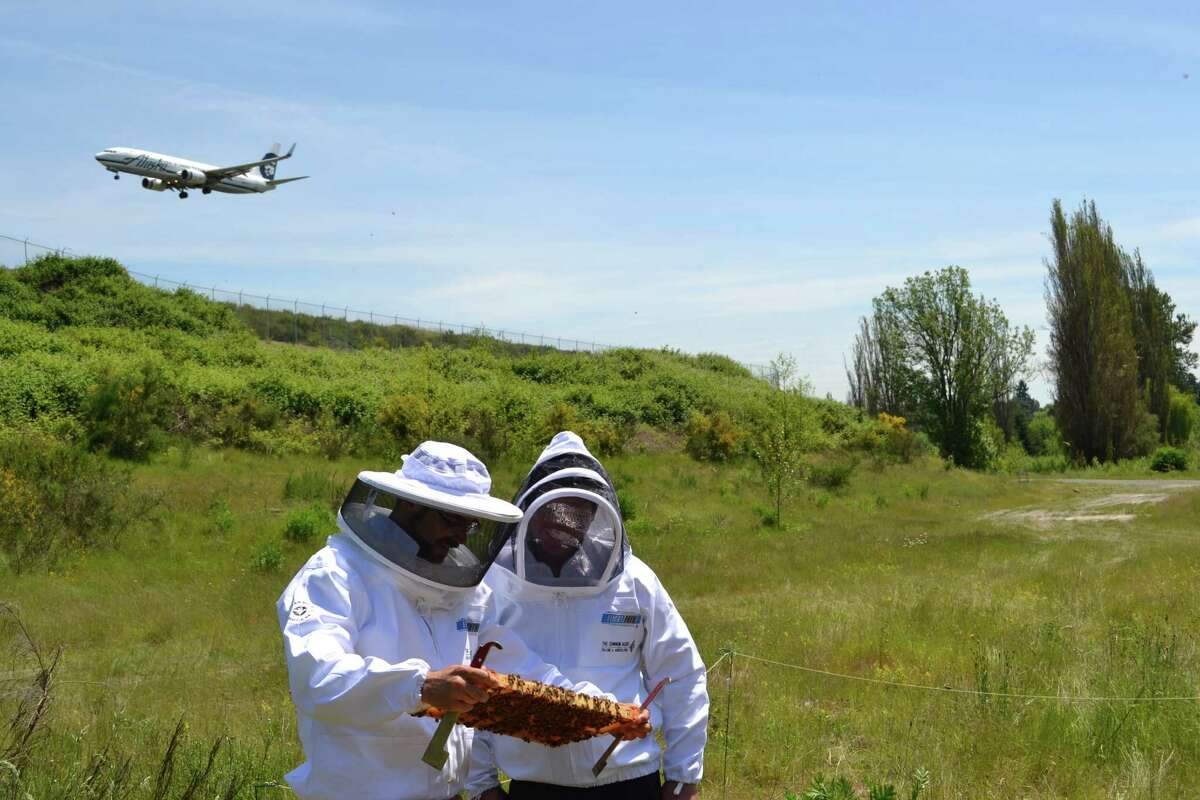 Sea-Tac Airport's lead beekeeper, Bob Redmond, director of the local nonprofit The Common Acre, and beekeeper David Feinberg look at the health of the hive next to the center runway.