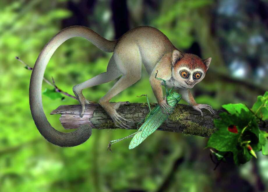 This artist rendering provided by Xijun Ni, Institute of Vertebrate Paleontology and Paleoanthropology, Chinese Academy of Sciences shows a reconstruction of Archicebus achilles in its natural habitat of trees. Photo: Xijun Ni, HO / Xijun Ni, Institute of Vertebrat